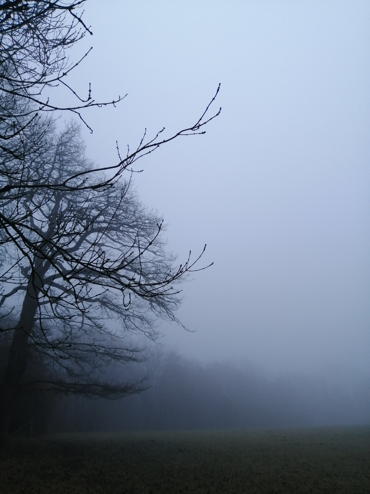 March mist, unclear way ahead